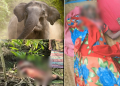 Three dead, over 10 injured as tusker goes on a rampage in Puri dist