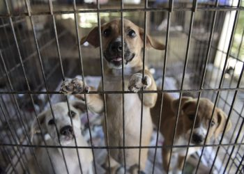 Puppies stand in a cage (Photo: Associated Press)