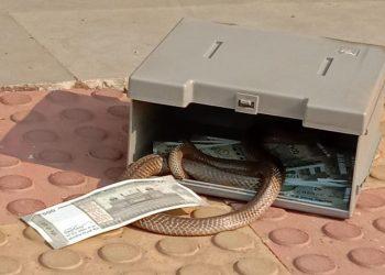 Bizarre! Snake found inside ATM in Jharsuguda