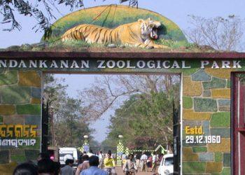 Nandankanan gets four Asiatic lions, pair of foxes