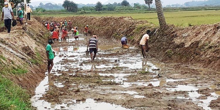Dhenkanal district tops in Odisha in MGNREGA man-days generation