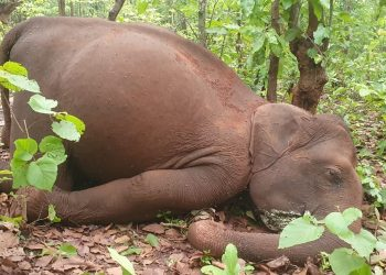 2 elephants poached for tusks
