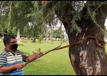 5-foot-long cobra rescued from Lok Seva Bhawan