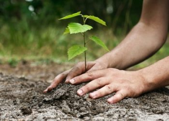 Angul forest division takes up plantation drive on 895 acres