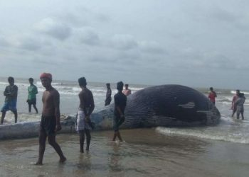 Carcass of giant whale washed ashore on West Bengal's beach; see pictures