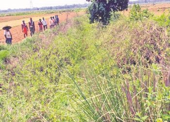 Once a boon, Kandasara drain becomes a bane for Jajpur farmers