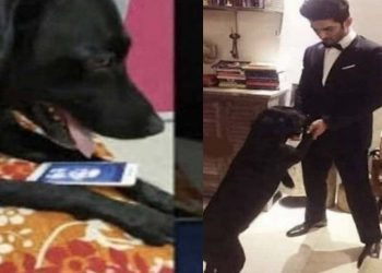 Sushant Singh Rajput's pet dog devastated after his death; heartbreaking video will bring tears to your eyes