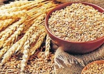 Wheat and pulses