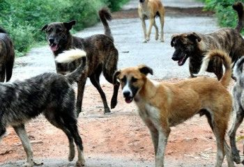 5-year-old Kalahandi boy mauled by stray dogs dies