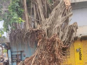 Century-old Banyan tree in Berhampur comes out as winner