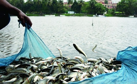 Fish production hit in Kandhamal district
