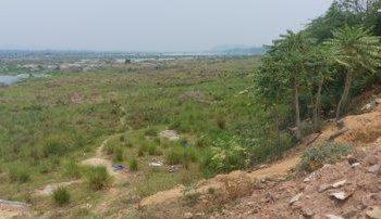Green Mahanadi Mission goes haywire in western Odisha