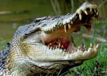 Minor boy killed in crocodile attack in Kendrapara