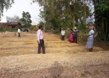Nuapada farmers 'gingerly' over crop failure