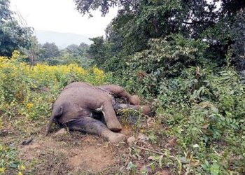 Elephant casualties on rise in Keonjhar