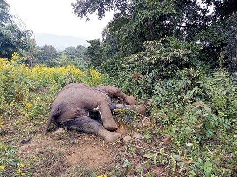 Elephant casualties on rise in Keonjhar