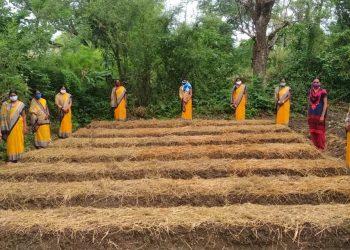 18k kitchen gardens to create livelihood, check malnutrition