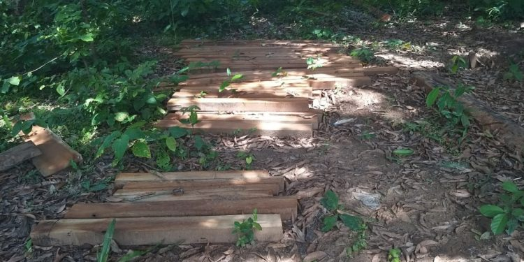 Timber smuggling rampant in Dhenkanal as forest department looks away