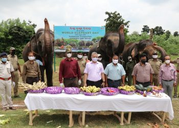 World Elephant Day being observed at Nandankanan Zoological Park
