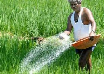 Boudh farmers left high and dry as fertilizer prices soar