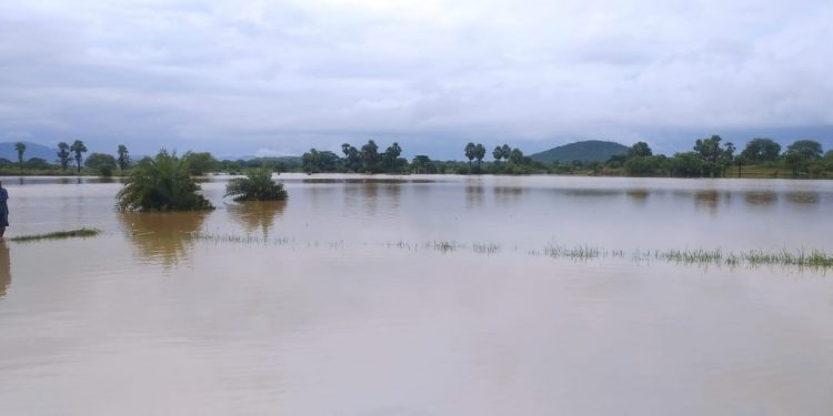 Dhenkanal's fish farmers badly hit by floods in Brahmani river