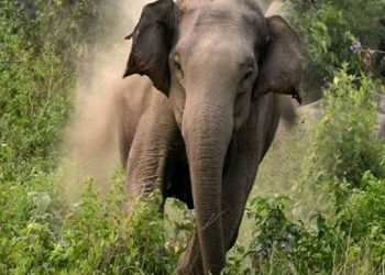 Elephant tramples one to death, injures another in Angul