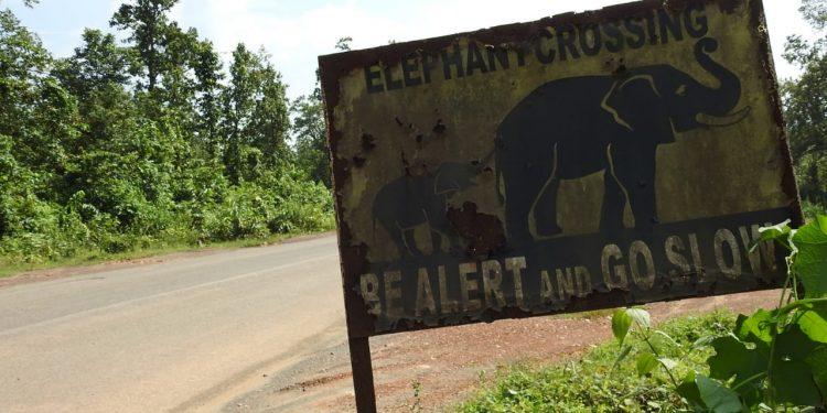 Road expansion in elephant corridor; NGT seeks report