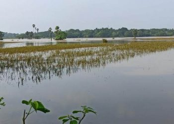Will flood-hit Jajpur limp back to normalcy