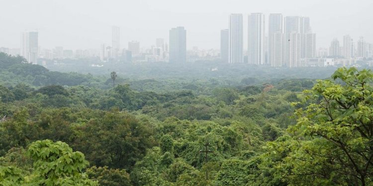Aarey forests(Image courtesy-Twitter)