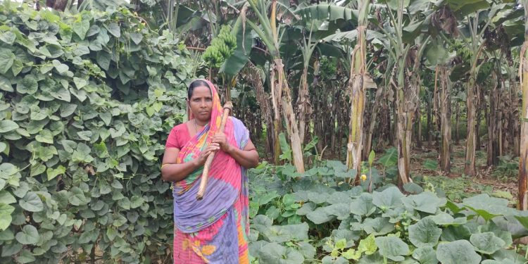 Angul widow engaged in farming suffers huge losses due to COVID-19 lockdown, seeks government help