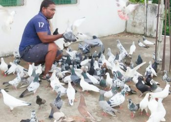 Bhadrak teacher turns a 'birdman'