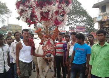 Bhuban's world famous 'Bullock Festival' gets green signal; to be observed with COVID-19 guidelines