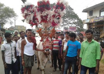 Uncertainty looms large on world famous bullock festival in Dhenkanal district's Bhuban