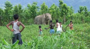 Task force to end man-animal conflicts - Orissa Post RSS Feed  IMAGES, GIF, ANIMATED GIF, WALLPAPER, STICKER FOR WHATSAPP & FACEBOOK
