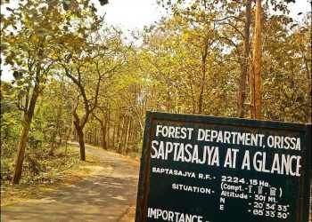 Dhenkanal forests turn from animals' safe haven to poachers' paradise