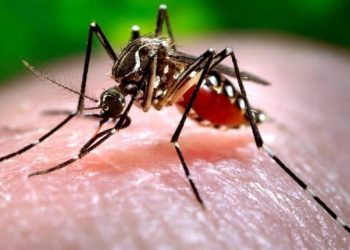 Home remedies to ward off mosquitoes