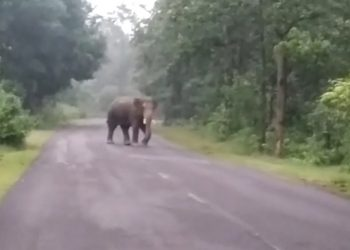 Man-elephant conflict Man trampled to death in Cuttack, elephant's carcass spotted in Ganjam