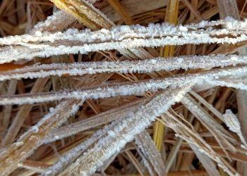 Odisha's Daringbadi sees season's first snowfall