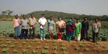 Success stories This is how these Angul farmers doubled their incomes
