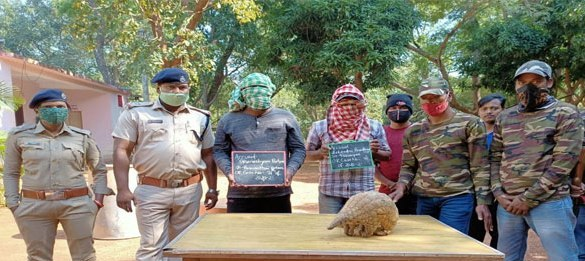 Wildlife trafficking racket busted Pangolin rescued, two nabbed
