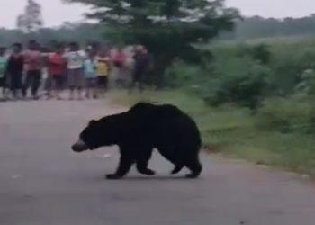 Bear attacks teacher inside school in Keonjhar
