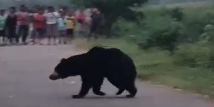 Bear attacks teacher inside school in Keonjhar