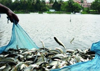 Major fishery project in dry riverbeds 'shelved'