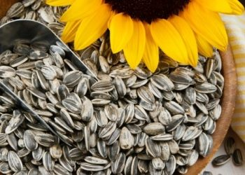 Amazing benefits of sunflower seeds during winter