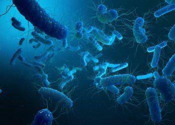 shigella bacteria.(photo:https://pixabay.com)/ IANS