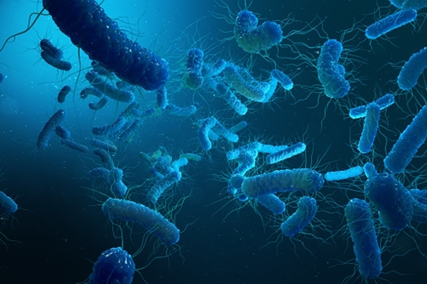 Do bacteria get infected by virus? This is what researchers have to say - OrissaPOST