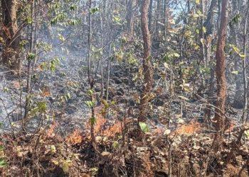 Herbivores face food crunch as Similipal burns