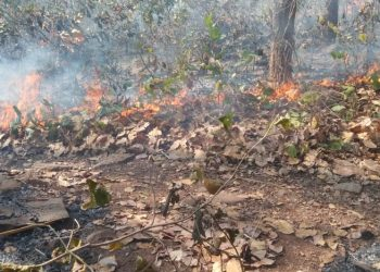 Similipal forest fires fully contained, says forest department