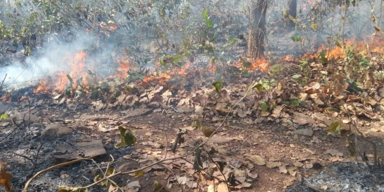 Similipal is burning