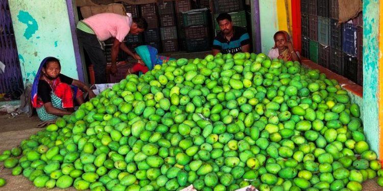 Mango trade hit by slump